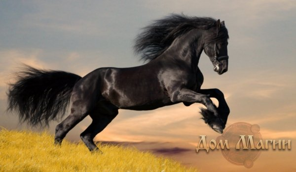 До чого сниться кінь? Сонник – білий кінь у сні – сприятливий знак