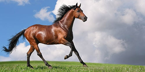 До чого сниться коричнева кінь з різних сонникам