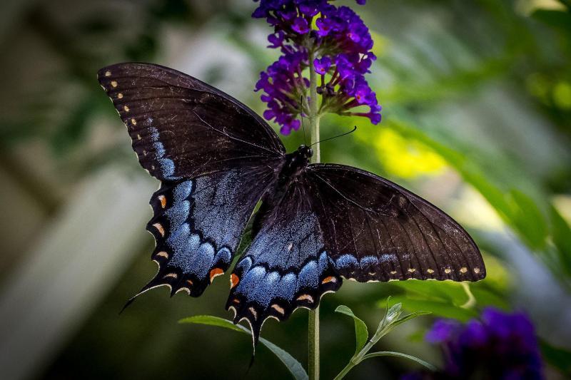 До чого сняться метелики: значення сну, тлумачення різних сонників