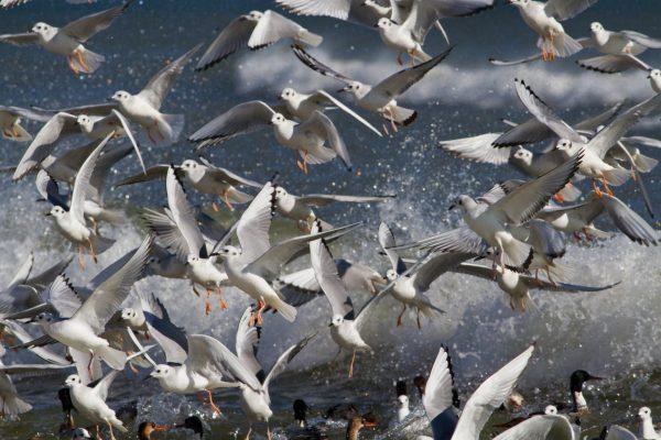 До чого сняться птахи – тлумачення по Міллеру, Цвєткову, Вангу, Фрейдом, ісламського, мусульманського та іншим сонникам