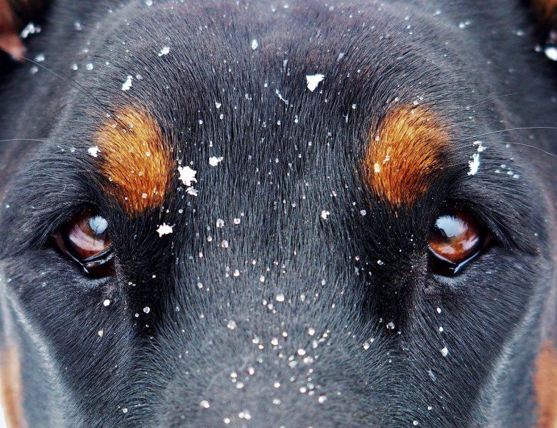 Собака вкусила уві сні: до чого сниться — варіанти тлумачень по Міллеру та іншим сонникам